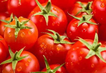 番茄怎样保鲜