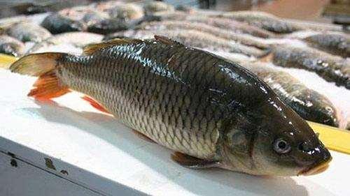 如何鉴别鱼是否新鲜